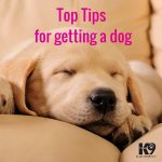 top-tip-for-getting-a-dog